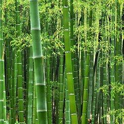 Bamboo Bamboo Uses And Benefits Bamboo Sustainability