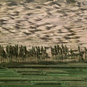 Climate change causing desertification